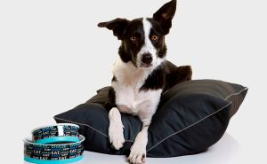 New pet homewares collection launches