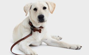 Elk partners with Guide Dogs Australia on new range