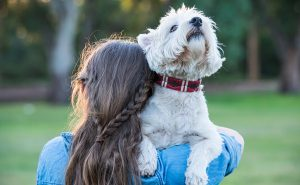 Get your paws on this new dog accessories range
