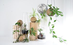 Nature and art combine in new resin collection
